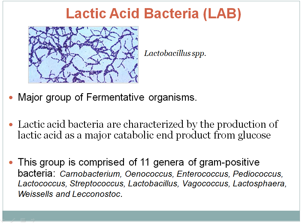 Lactic Acid Bacteria and its Fermented Product (18 slides)