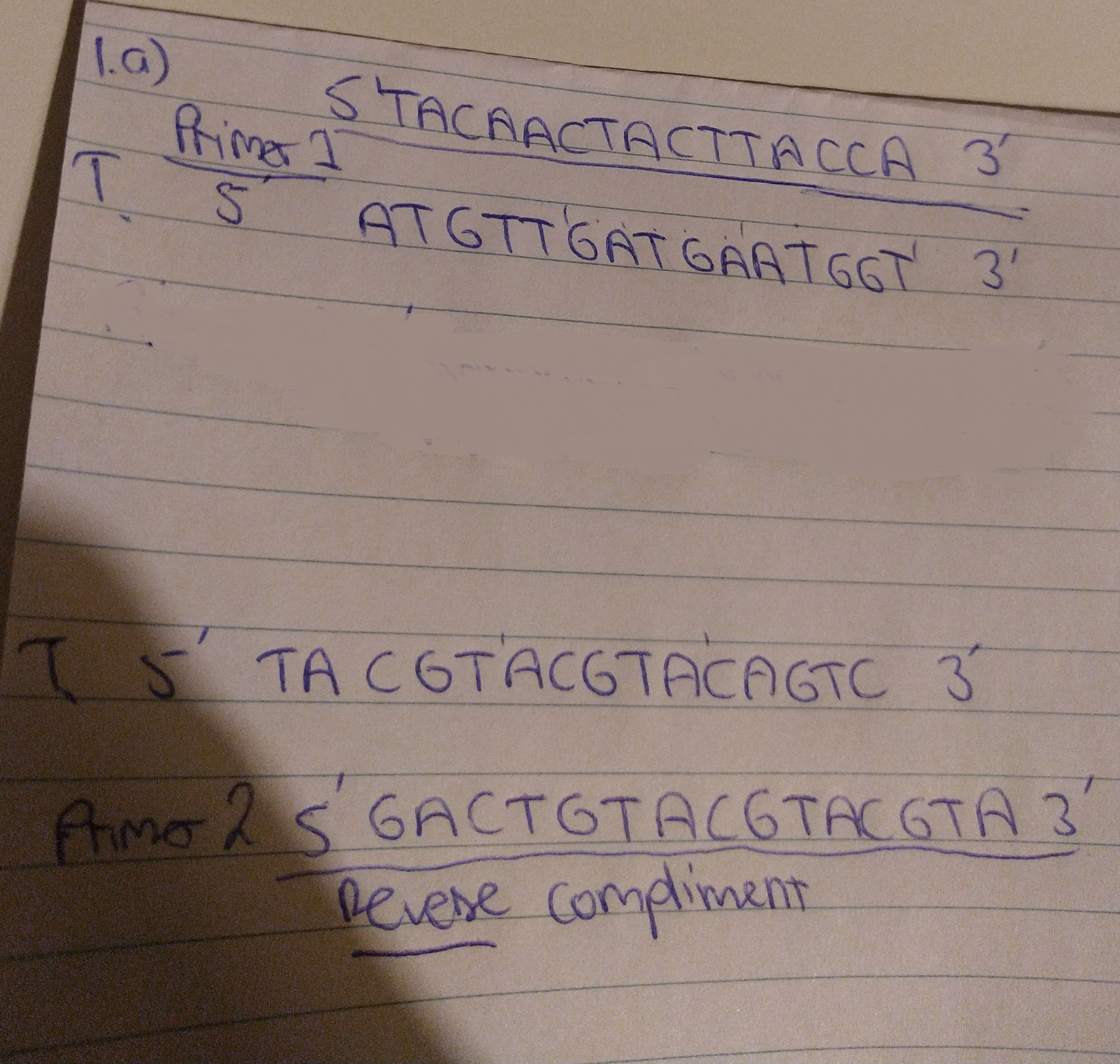 PCR, Replication And Transcription, And Lac Operon Questions