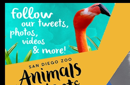 Web Banner - The San Diego Zoo